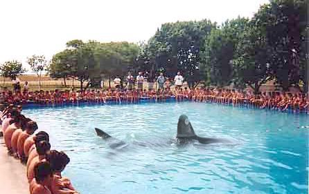 pileta-poli-tiburon.jpg